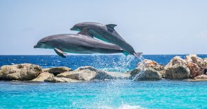 dolphins-906175_1280